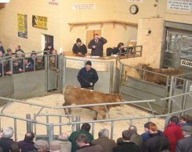 Red Tractor Livestock Market and Collection Centre Scheme